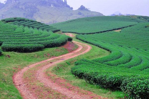 Nơi những con đường vắng lặng ở Mộc Châu