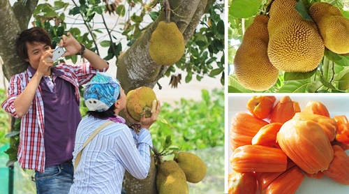 Du khách có thể thoải mái thưởng thức đủ các loại trái cây tươi ngon