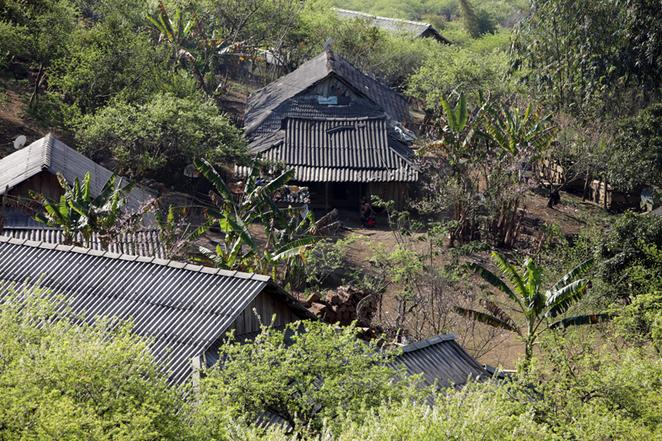 Hoa mận mọc bao phủ bản làng ở Mộc Châu