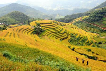 Ngất ngây vẻ đẹp mùa lúa chín vàng ở Hà Giang