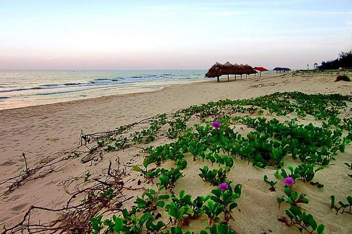 Rau muống ven bờ biển Nhật Lệ