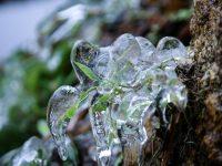 Thực vật đóng băng trên đỉnh Fansipan